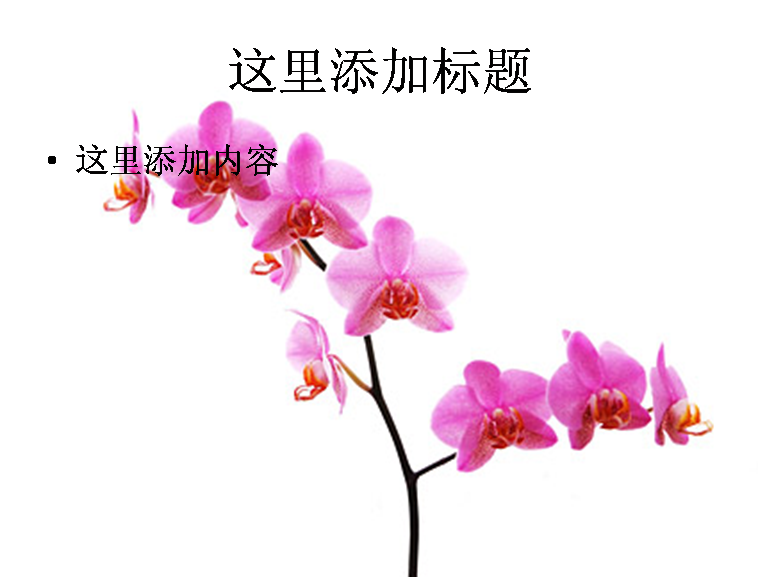 兰花白底图片ppt素材-7花卉图片ppt