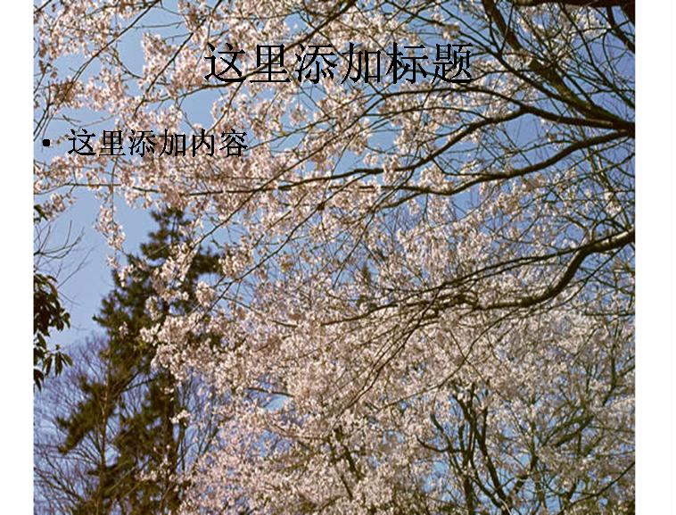 冬天梅花图片ppt模板免费下载_113743- wps在线模板
