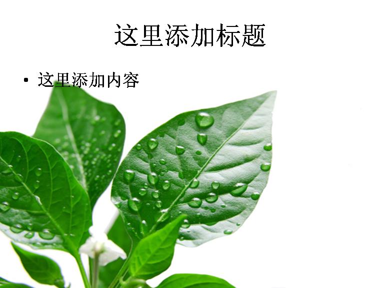 几片嫩叶绿叶和露珠高清图片ppt素材植物素材模板免费