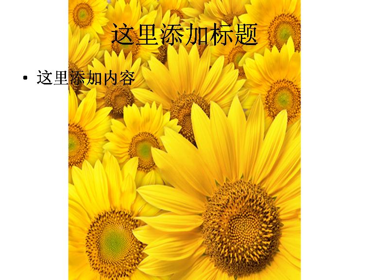 向日葵素材图片ppt模板