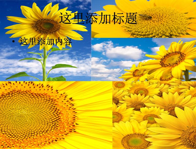 向日葵高清图片ppt模板