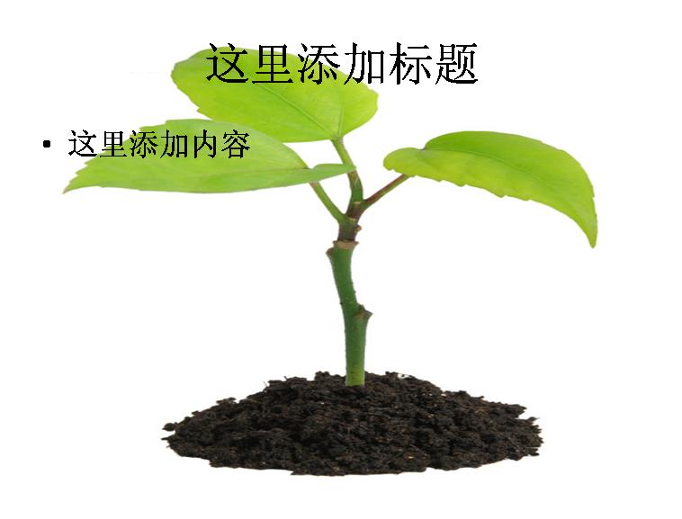 呵护植物高清图片ppt-2植物素材模板免费下载_113862