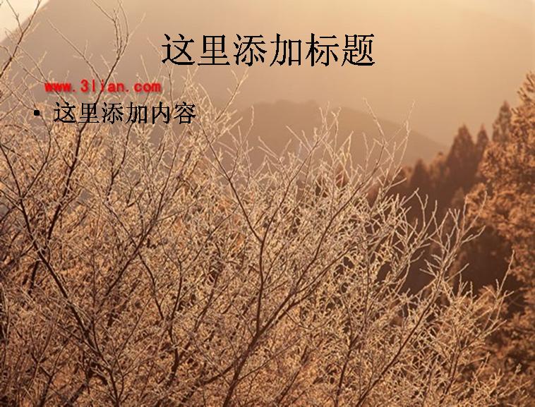 夕阳树林图片ppt