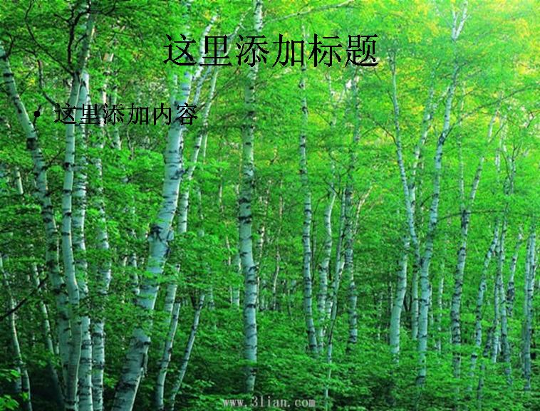 大自然风景森林图片ppt