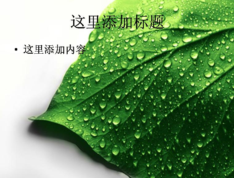 布满水珠的绿色树叶图片ppt素材植物素材
