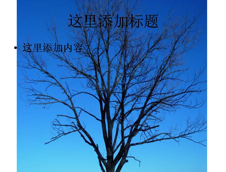 干枯的树木图片ppt