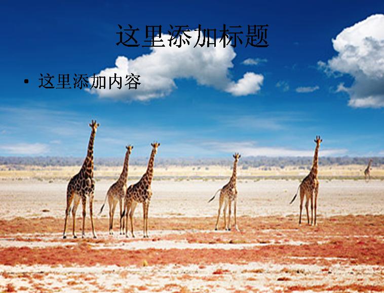 平原上的长颈鹿图片ppt素材植物素材模板免费下载
