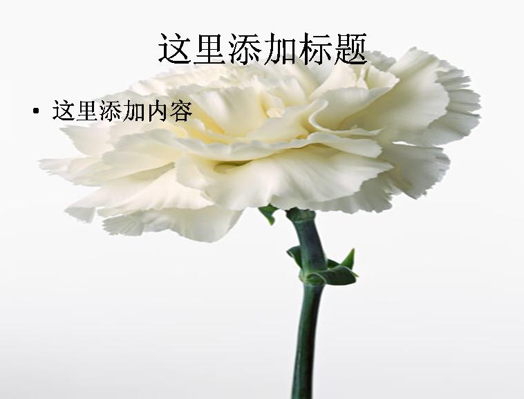 康乃馨图片ppt模板免费下载_114130- wps在线模板