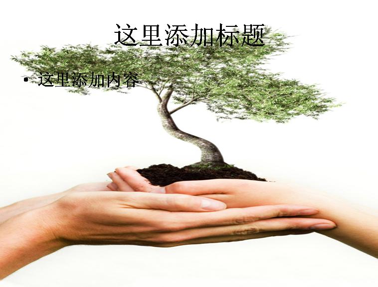 手捧观赏树图片ppt素材模板免费下载
