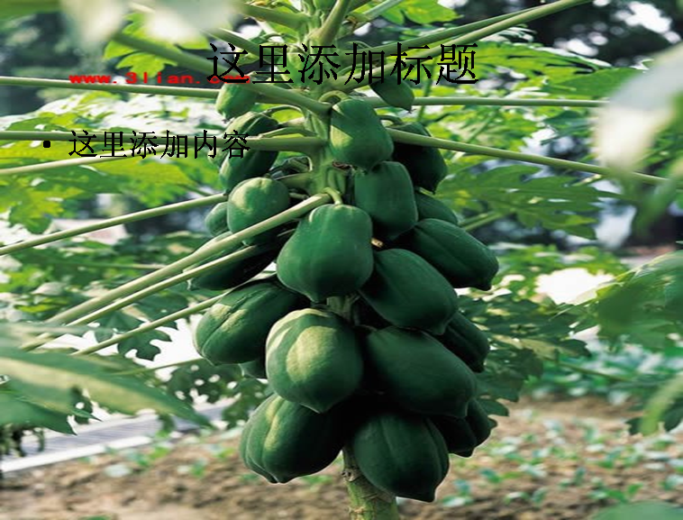 ppt图片素材 成果树