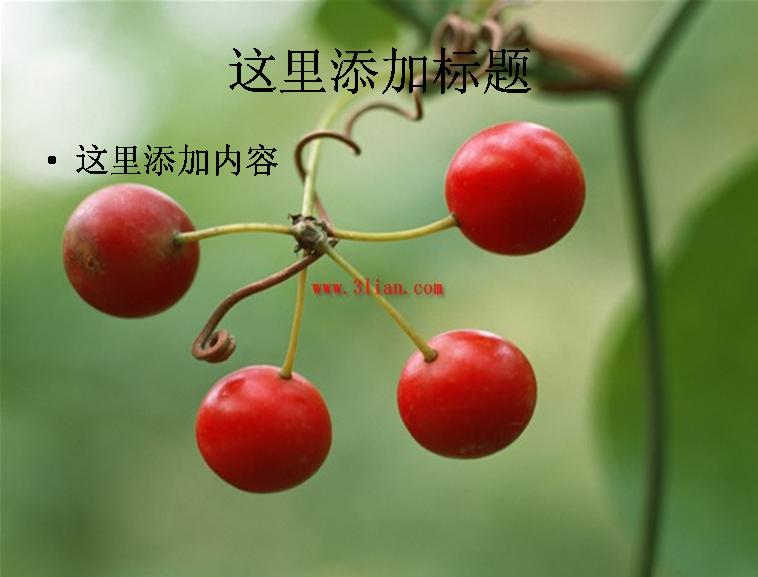 果实,果树图片ppt