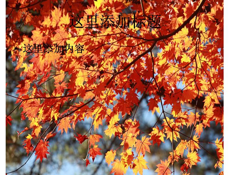 枫树素材图片ppt