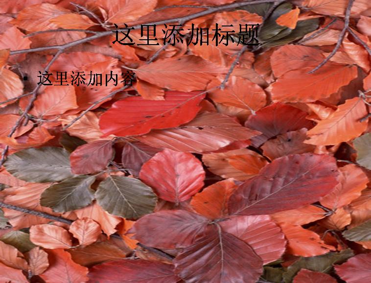 树叶图片ppt