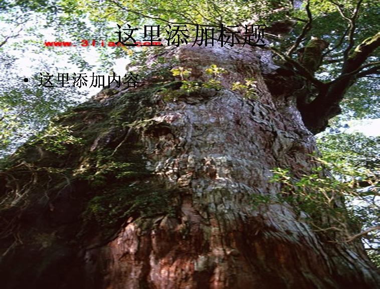 树木素材图片ppt模板