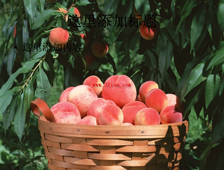 桃子,桃树图片ppt模板免费下载-蜘蛛猴计算机 通信免费下载