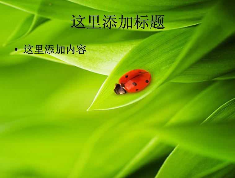 植物与瓢虫图片ppt素材模板免费下载
