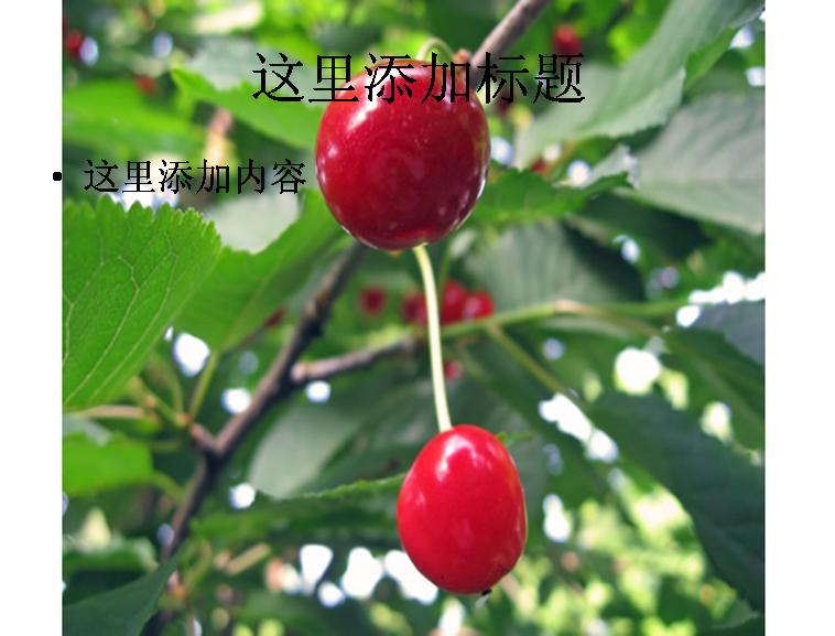 樱桃树图片ppt模板免费下载_114808- wps在线模板