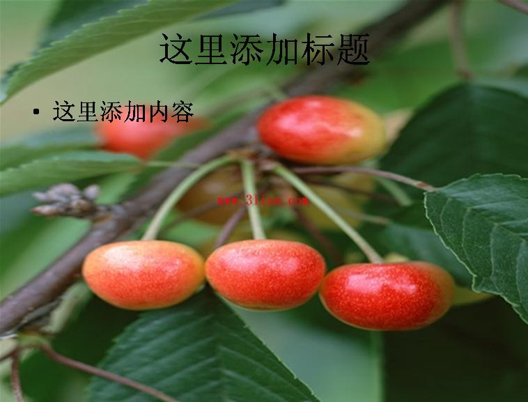 樱桃树果树图片ppt