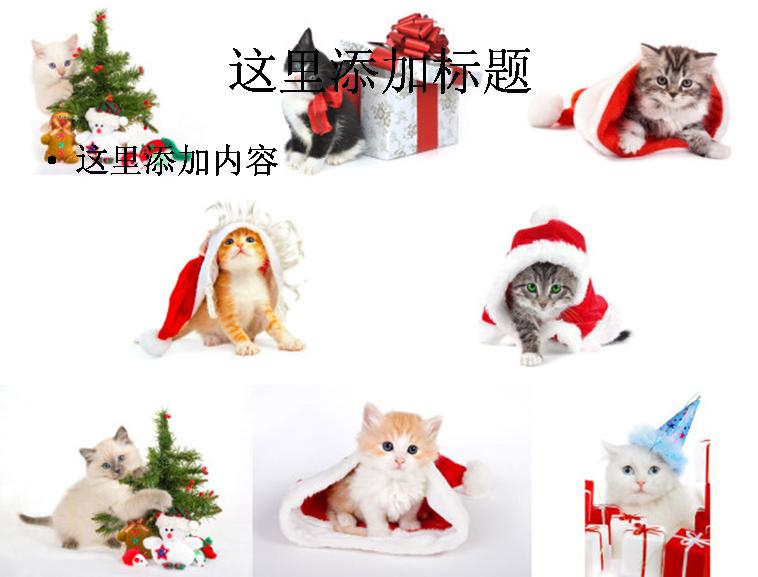 猫猫过圣诞高清图片ppt集植物素材