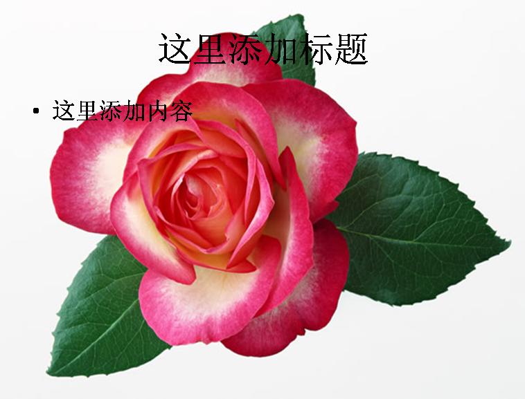 玫瑰叶子折纸教程图解 纸玫瑰的叶子折纸图解 简单玫瑰折纸教程图解图片