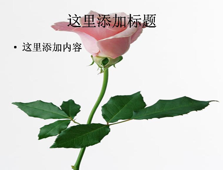 玫瑰花发型步骤图片