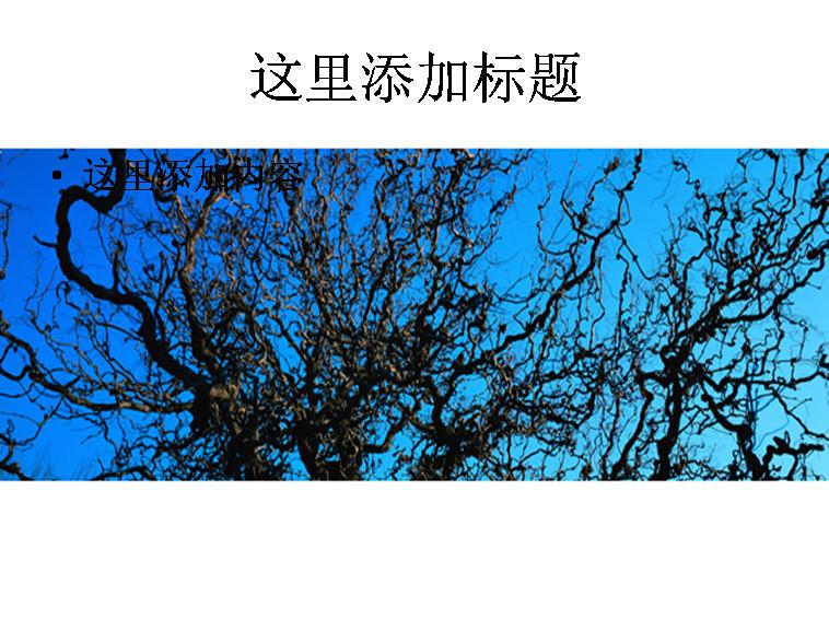 秋天枯树图片ppt