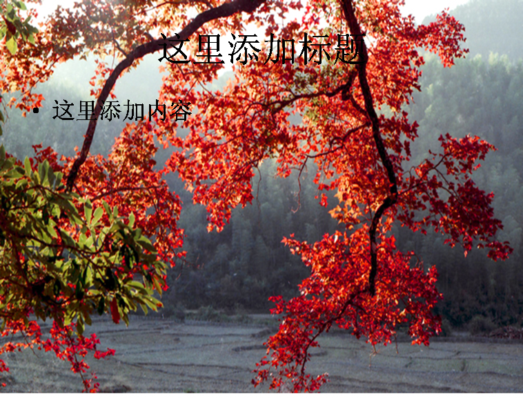 秋天红树叶图片ppt模板免费下载_115313- wps在线模板