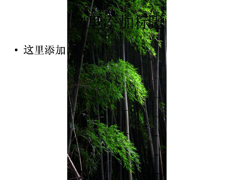 竹林素材图片ppt                    标  签