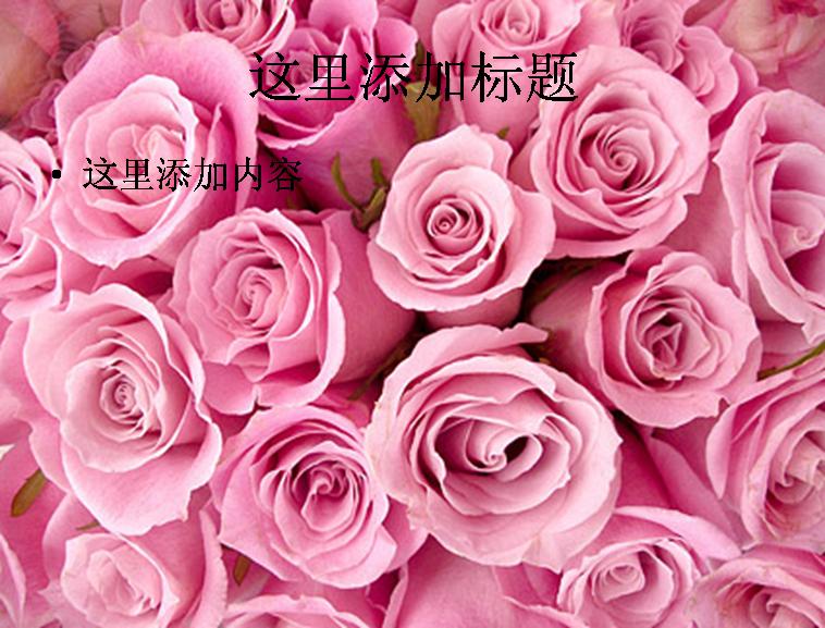 粉红色玫瑰花背景图片ppt素材花卉图片ppt
