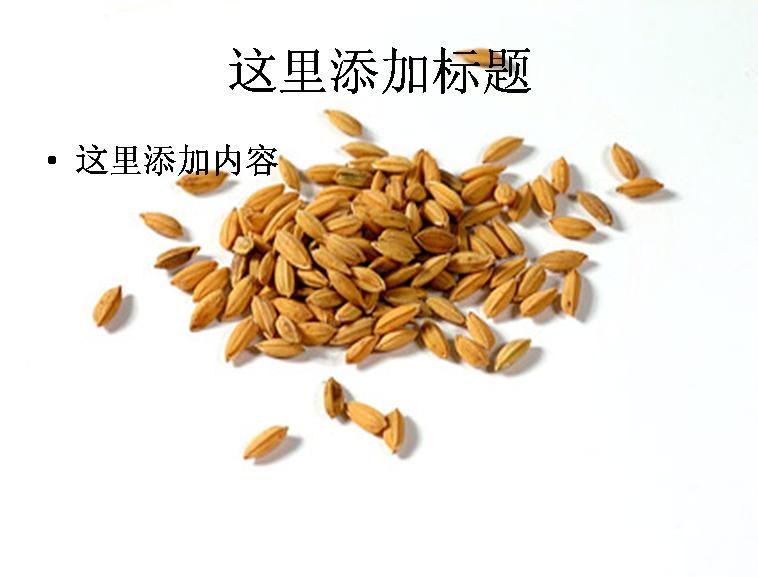 粮食系列图片ppt素材-4植物素材模板免费下载