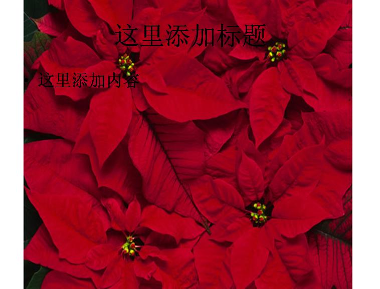 红色叶子植物图片ppt模板免费下载_115475- wps在线