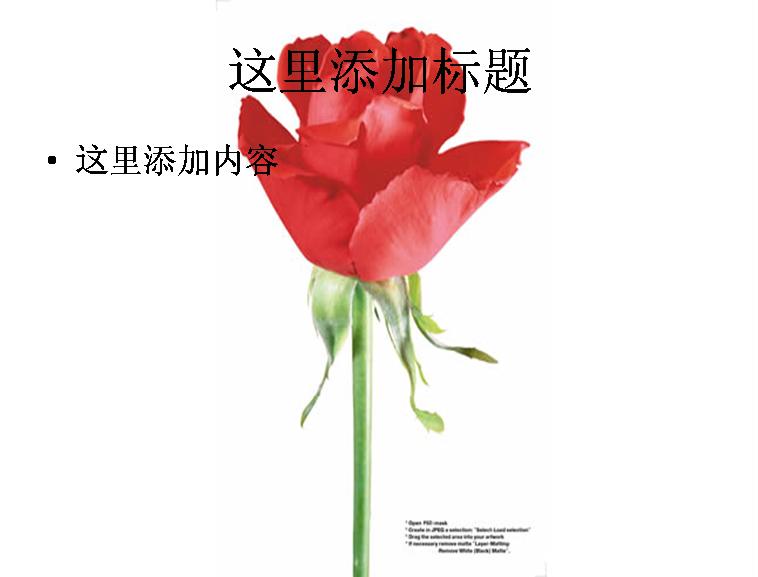 红色玫瑰素材图片ppt
