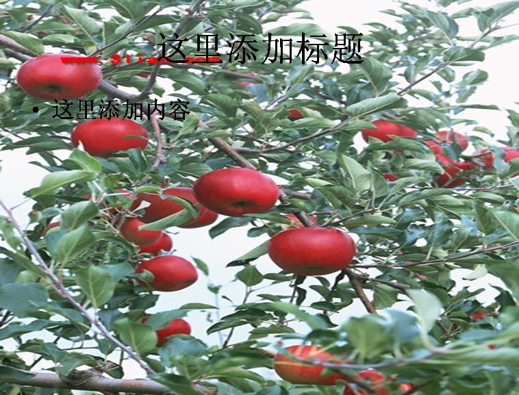 红苹果果树图片ppt模板免费下载_115533- wps在线模板