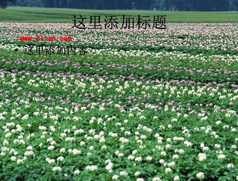 花卉田野图片ppt模板免费下载_115770- wps在线模板