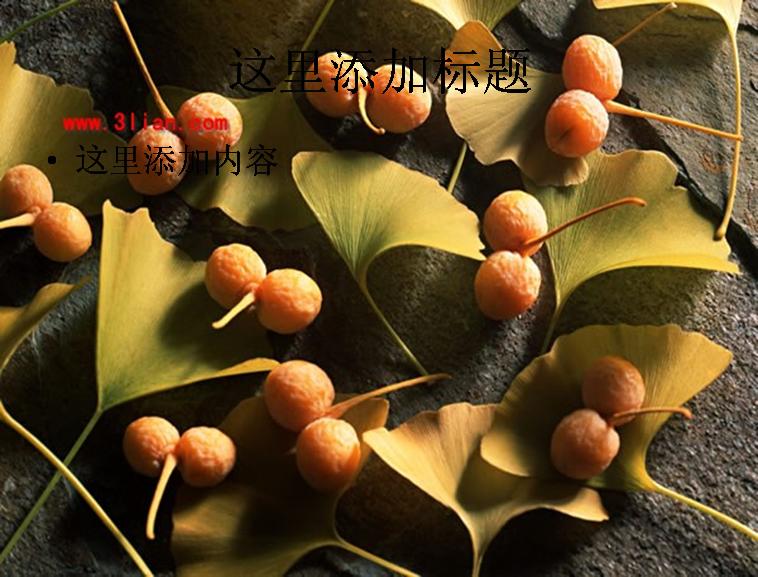 银杏叶果实图片ppt模板免费下载
