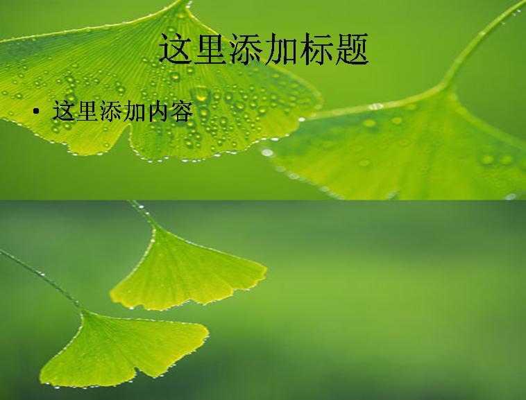 银杏叶水滴,高清图片ppt植物素材模板免费下载