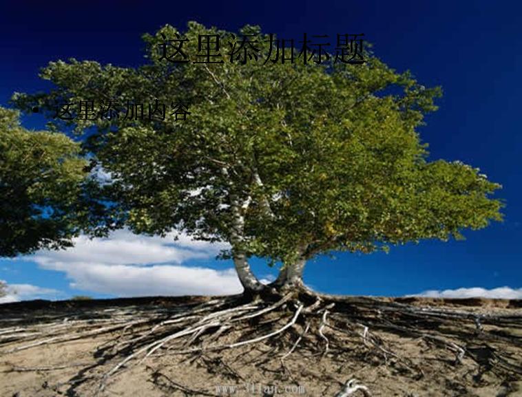 露根的树木图片ppt模板免费下载_116425- wps在线模板