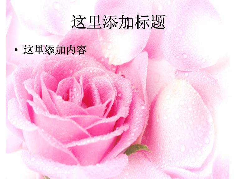 高清玫瑰花素材图片ppt