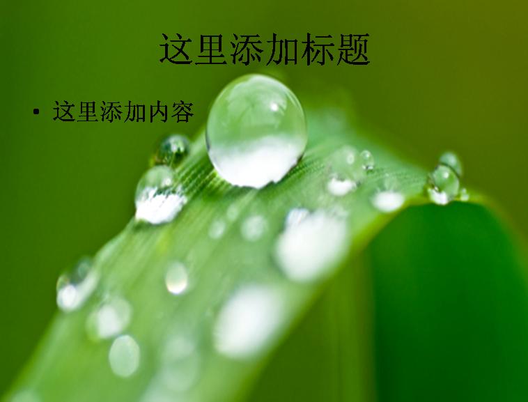 ppt素材图片一个带水滴的树叶