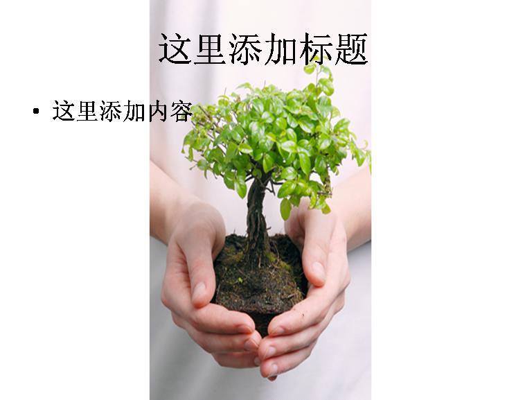 手心中的树苗图片ppt模板免费下载_146100- wps在线