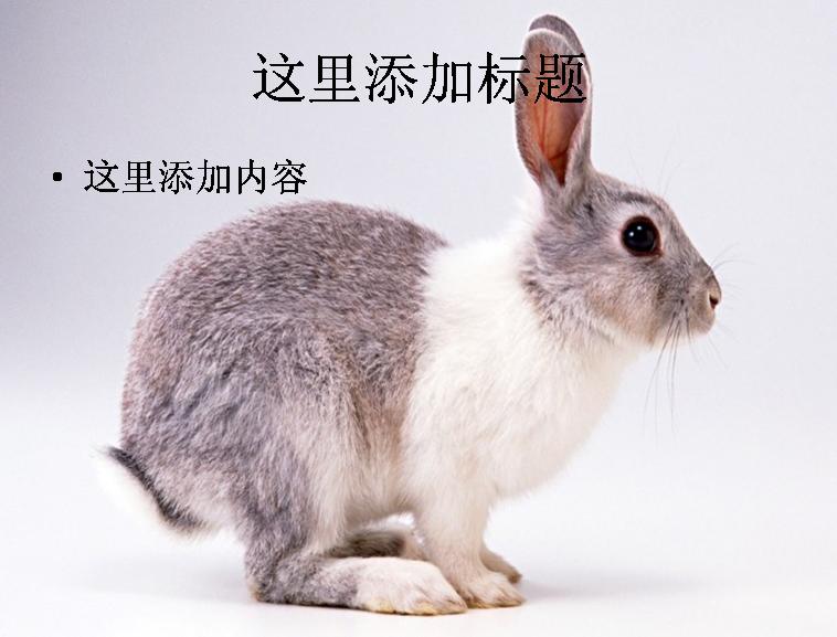 壁纸 动物 兔子 758_577