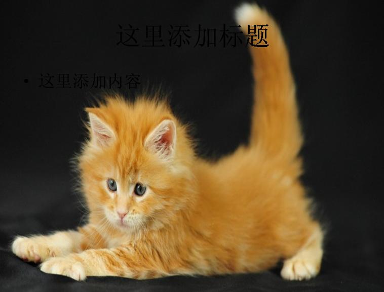 可爱猫咪第7辑第19张模板免费下载_149337- wps在线
